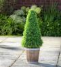 Argos Home Faux Cone Tree Wooden Pot