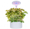 moistenland Hydroponics Growing System, Indoor Herb Garden Starter Kit with Grow LED Lights, Smart G