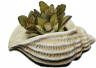 Classic Home and Garden 260024-C149 Jagger Shell Succulent Planter, Sand