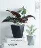 Home Garden Decoration Artificial Mini Bonsai with Gray cement basin