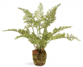 Napa Home & Garden Conservatory Soft Fern Drop-in 8.5