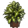 Nearly Natural 6639 24in. Golden Dieffenbachia Silk Plant,Green,12